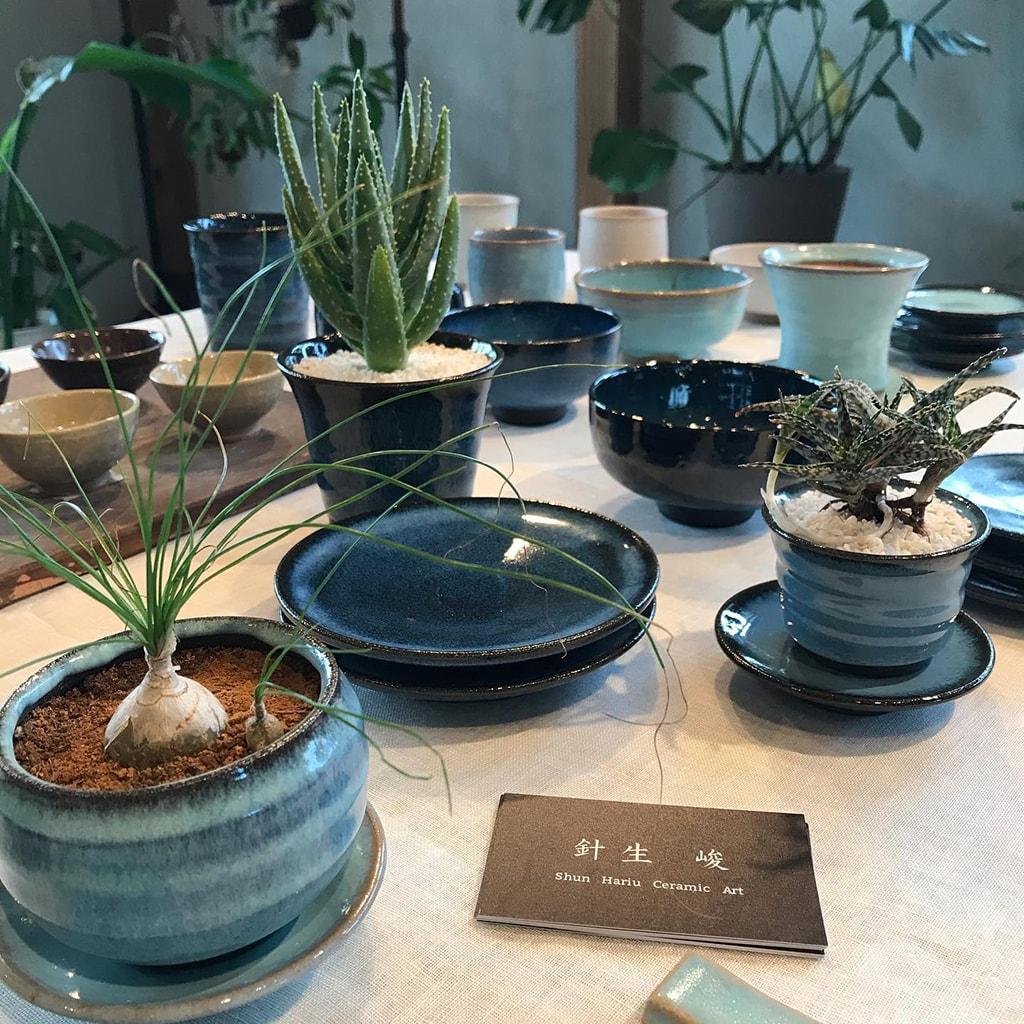 ハナミズキグリーン 可愛いサイズの植木鉢1